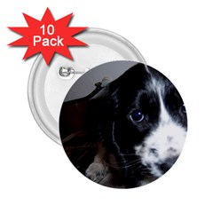 Black Roan English Cocker Spaniel Puppy 2.25  Buttons (10 pack)