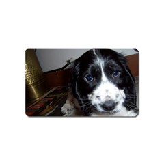 Black Roan English Cocker Spaniel Puppy Magnet (Name Card)