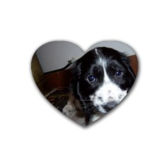 Black Roan English Cocker Spaniel Puppy Heart Coaster (4 pack)