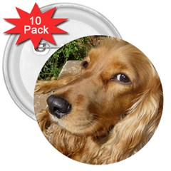 Red Cocker Spaniel Red 3  Buttons (10 pack)