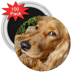 Red Cocker Spaniel Red 3  Magnets (100 pack)