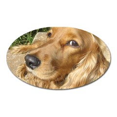 Red Cocker Spaniel Red Oval Magnet