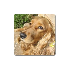 Red Cocker Spaniel Red Square Magnet