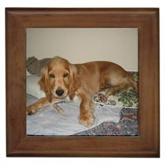 Red Cocker Spaniel Puppy Framed Tiles