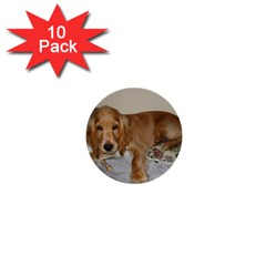 Red Cocker Spaniel Puppy 1  Mini Buttons (10 pack)