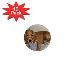 Red Cocker Spaniel Puppy 1  Mini Magnet (10 pack)