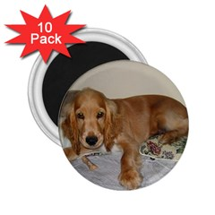 Red Cocker Spaniel Puppy 2.25  Magnets (10 pack)