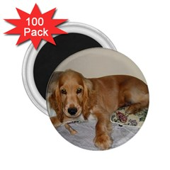 Red Cocker Spaniel Puppy 2.25  Magnets (100 pack)