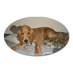 Red Cocker Spaniel Puppy Oval Magnet