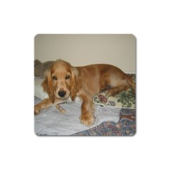 Red Cocker Spaniel Puppy Square Magnet