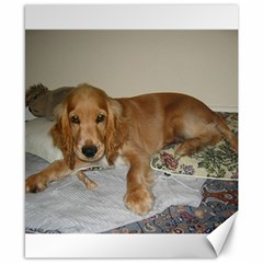 Red Cocker Spaniel Puppy Canvas 8  x 10