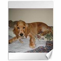 Red Cocker Spaniel Puppy Canvas 36  x 48