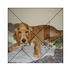 Red Cocker Spaniel Puppy Acrylic Tangram Puzzle (6  x 6 )