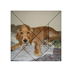 Red Cocker Spaniel Puppy Acrylic Tangram Puzzle (4  x 4 )