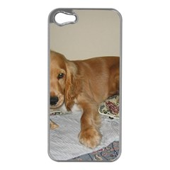 Red Cocker Spaniel Puppy Apple iPhone 5 Case (Silver)