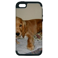Red Cocker Spaniel Puppy Apple iPhone 5 Hardshell Case (PC+Silicone)