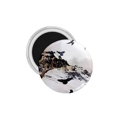 Birds Crows Black Ravens Wing 1 75  Magnets