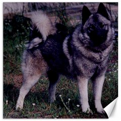 Norwegian Elkhound Full 3 Canvas 16  x 16