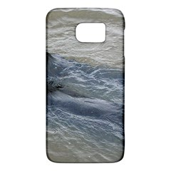2 Flat Coated Retrievers Swimming Galaxy S6