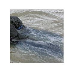 2 Flat Coated Retrievers Swimming Small Satin Scarf (Square)