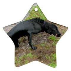 Flat Coated Retriever Wet Star Ornament (Two Sides)
