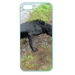 Flat Coated Retriever Wet Apple Seamless iPhone 5 Case (Color)