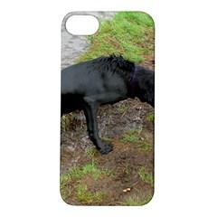 Flat Coated Retriever Wet Apple iPhone 5S/ SE Hardshell Case
