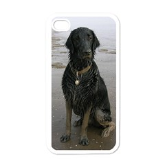 Flat Coated Retriever Muddy Wet Apple iPhone 4 Case (White)