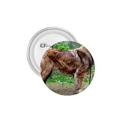 Leonberger Full 1.75  Buttons
