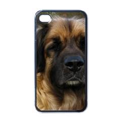 Leonberger 2 Apple iPhone 4 Case (Black)