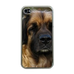 Leonberger 2 Apple iPhone 4 Case (Clear)