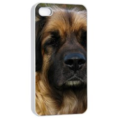 Leonberger 2 Apple iPhone 4/4s Seamless Case (White)