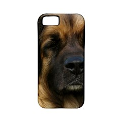 Leonberger 2 Apple iPhone 5 Classic Hardshell Case (PC+Silicone)