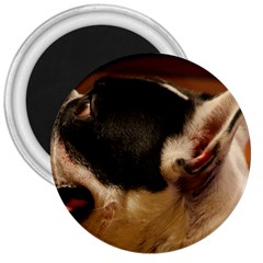 French Bulldog black white 3  Magnets