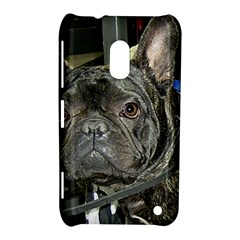 French Bulldog Brindle Nokia Lumia 620