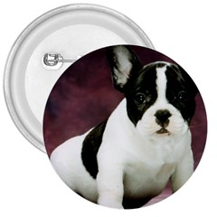 Brindle Pied French Bulldog Puppy 3  Buttons