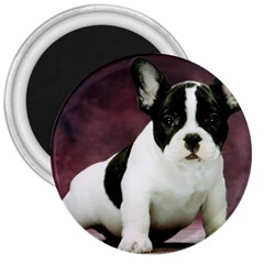 Brindle Pied French Bulldog Puppy 3  Magnets