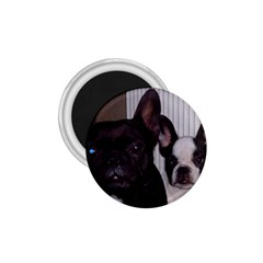 2 French Bulldogs 1.75  Magnets