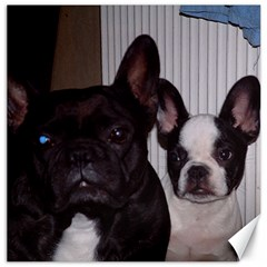 2 French Bulldogs Canvas 12  x 12