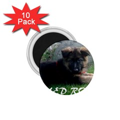 Spoiled Rotten German Shepherd 1.75  Magnets (10 pack)