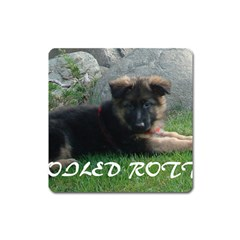 Spoiled Rotten German Shepherd Square Magnet