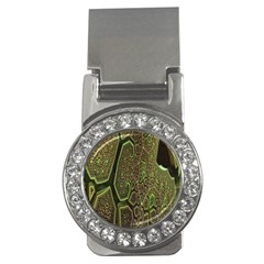 Fractal Complexity 3d Dimensional Money Clips (CZ)