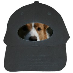 Red Border Collie Black Cap