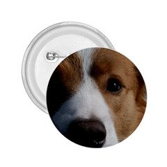 Red Border Collie 2.25  Buttons