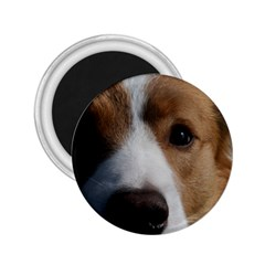 Red Border Collie 2.25  Magnets