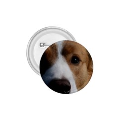 Red Border Collie 1.75  Buttons