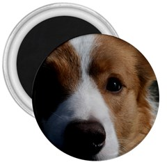 Red Border Collie 3  Magnets