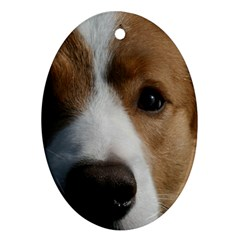 Red Border Collie Ornament (Oval)