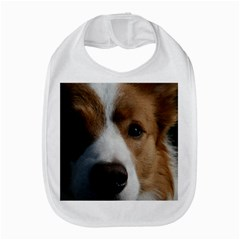 Red Border Collie Amazon Fire Phone