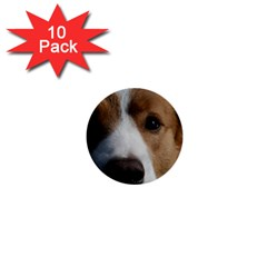 Red Border Collie 1  Mini Buttons (10 pack)